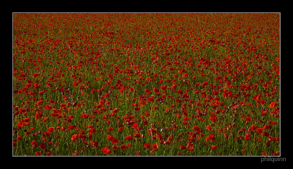Poppie fields v2 by philquinn