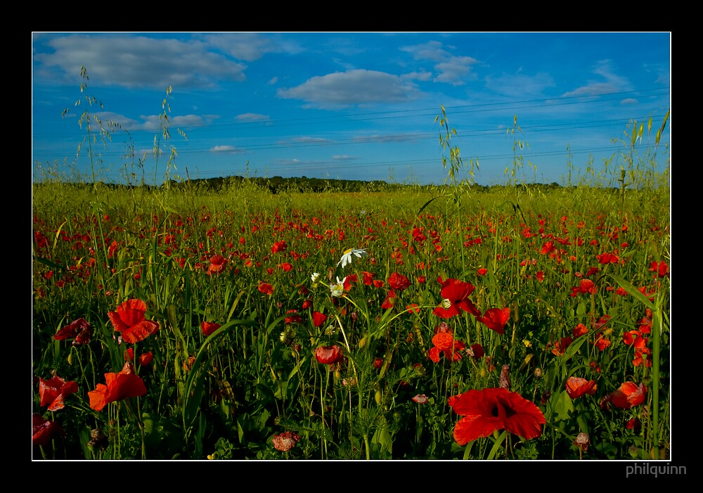 Poppie fields v3 by philquinn