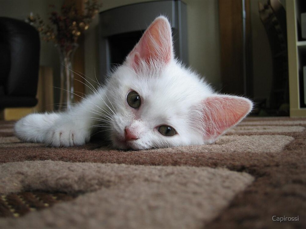 Cool Cat by Capirossi