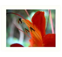 Petals Art Print