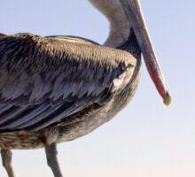 Pelican (Brief) Sticker