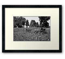Fossils in the Field (B&W) Framed Print