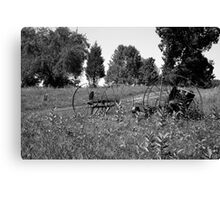 Fossils in the Field (B&W) Canvas Print