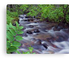 Fern Creek, Glacier NP Canvas Print