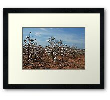 In Dem Ole Cotton Fields Back Home Framed Print