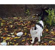 Cat Portrait, Brunswick Community Garden, Jersey City Photographic Print