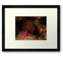 Eel in a Reef Framed Print