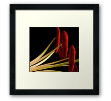 Ready for a Close-up Framed Print