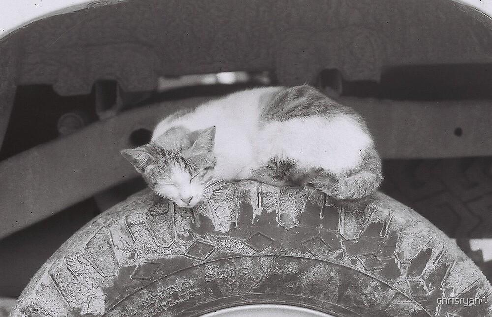 Cat Wheel by chrisryan