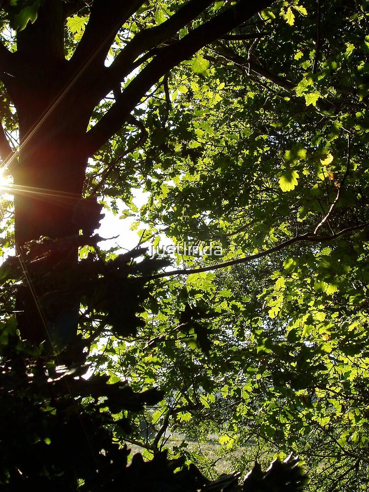 Rays by justlinda