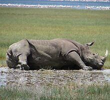 White Rhino Lying Down by Jemma Assender