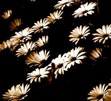 Showered Flowers by diongillard