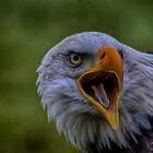 Angry Bird by Nicole W.