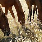 Horses by Lisa  Kenny