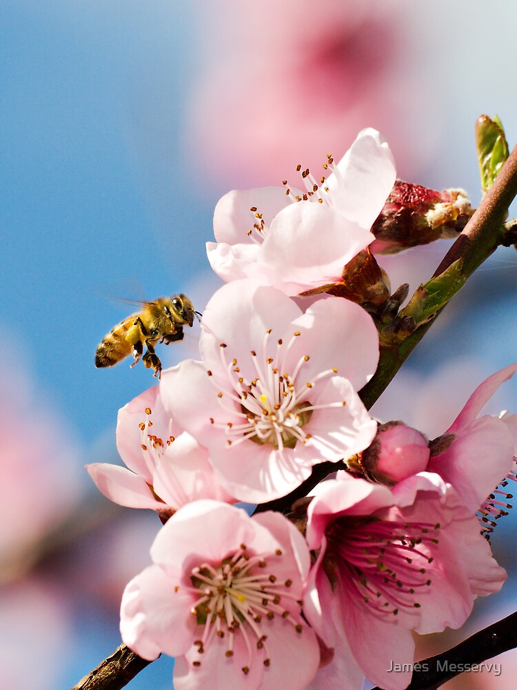 Bees and Blossoms by James  Messervy