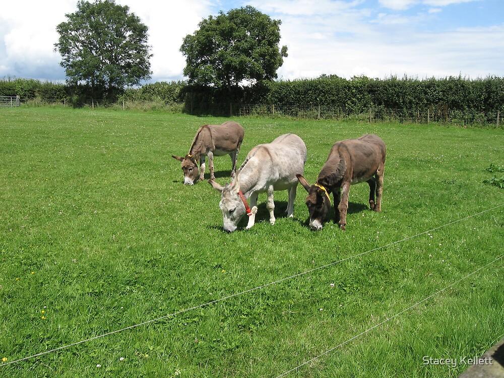 donkey refuge farm in England by Stacey Kellett