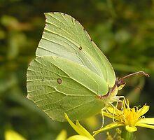 Butterfly by Annika Strömgren