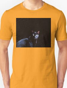 Cat in Black T-Shirt
