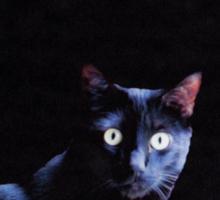 Cat in Black Sticker