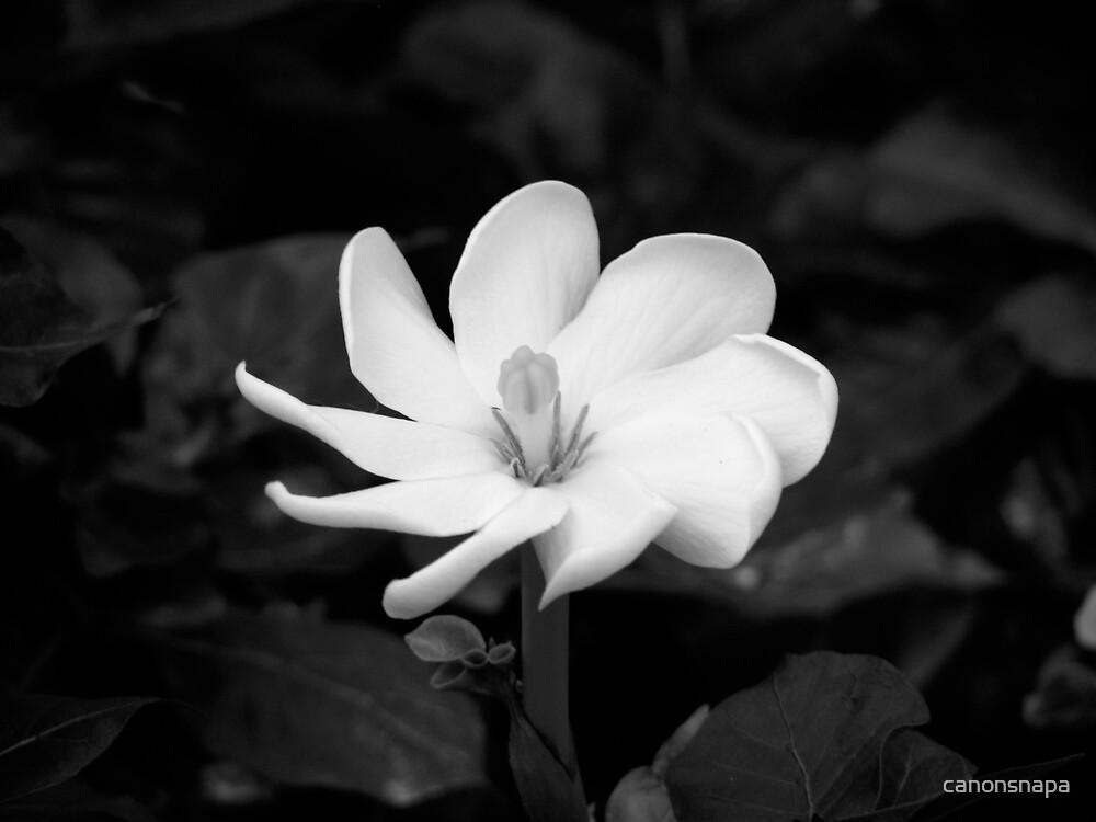 pinwheel by canonsnapa