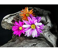 Driftwood Design Photographic Print