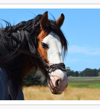 Horse near Bolwarra Weir Sticker