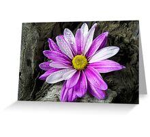Driftwood Daisy Greeting Card