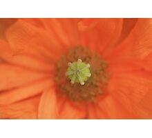 Peach Delight Photographic Print
