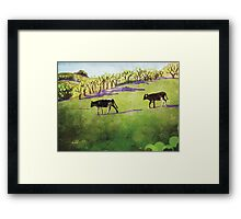 Young cows in green pasture Framed Print