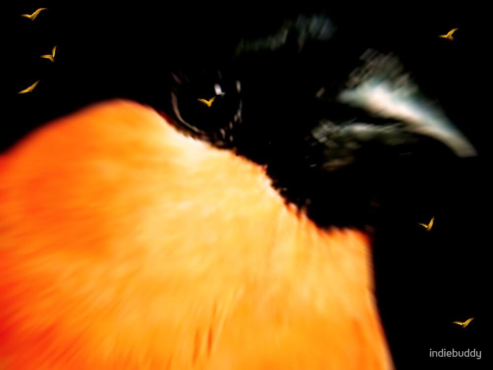 Orange Birds by indiebuddy