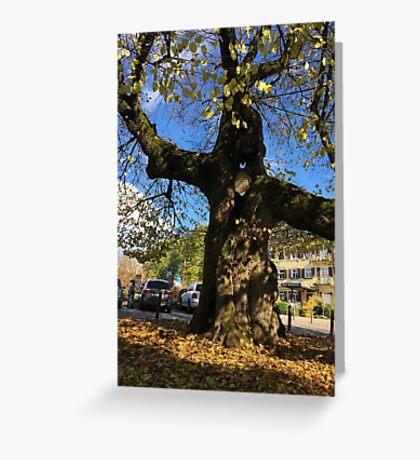 TreeOfHeiligenberg Greeting Card
