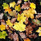 Autumn Leaves by Bruce Halliburton