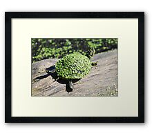 The Duckweed Sweater Framed Print
