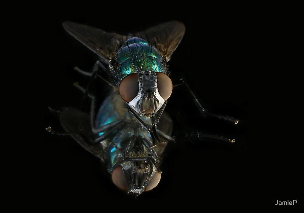 Blue Bottle Fly by JamieP