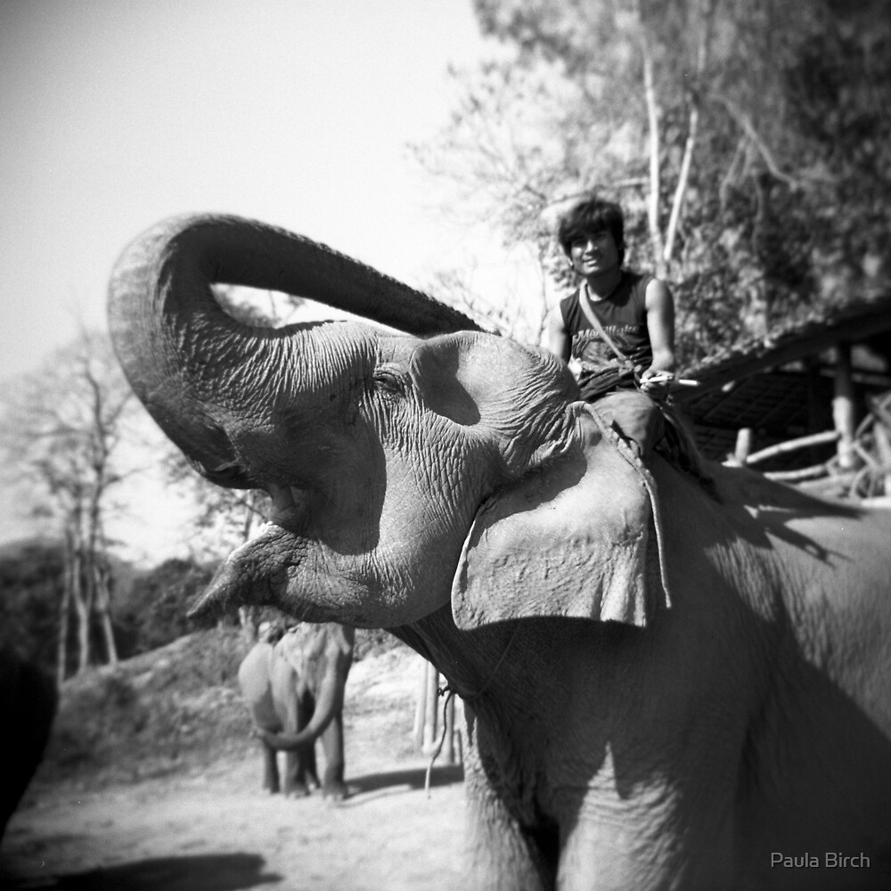 How Does One Eat An Elephant? by Paula Birch