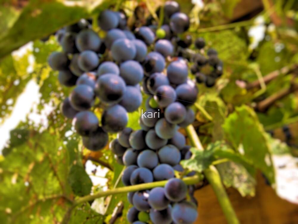 Tender Grapes by kari