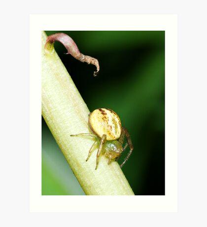 Spider on a Dandelion Stalk Art Print