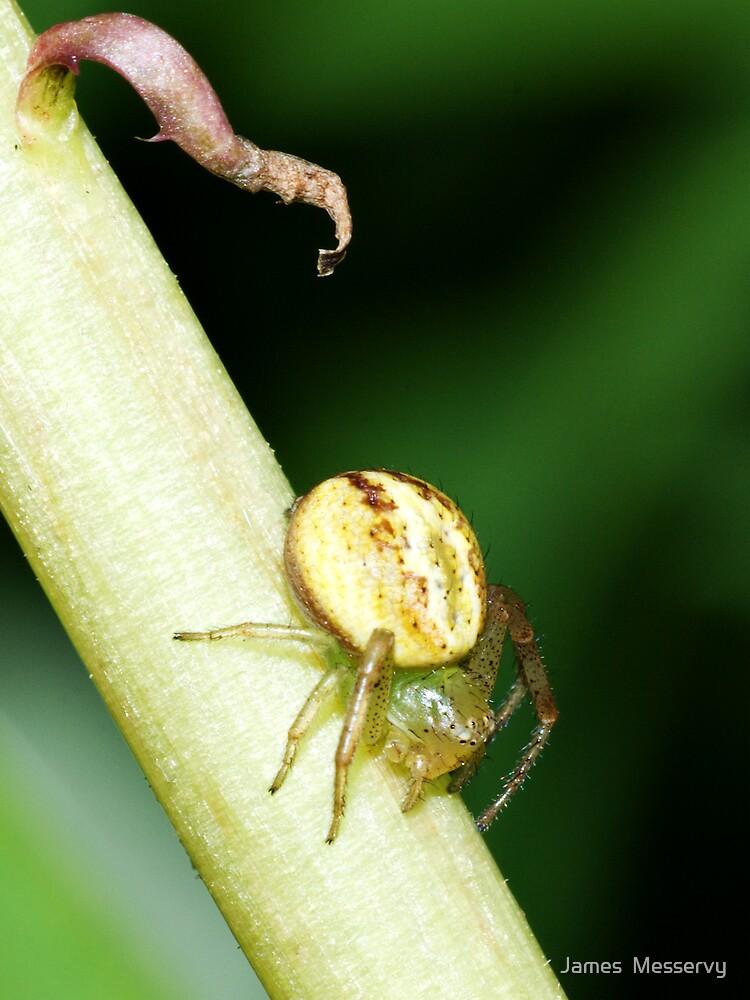 Spider on a Dandelion Stalk by James  Messervy