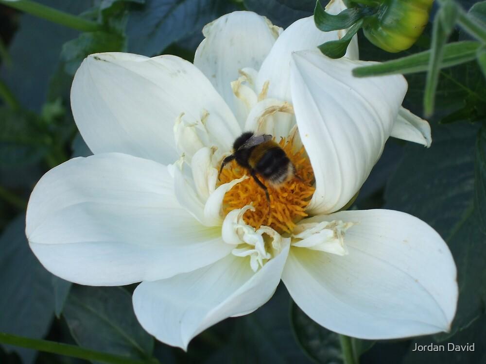 bummble bee by Jordan David