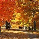 The blazing colors of Autumn by ANNABEL   S. ALENTON