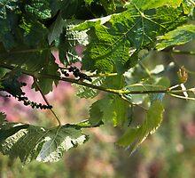 Vines by sxpnz