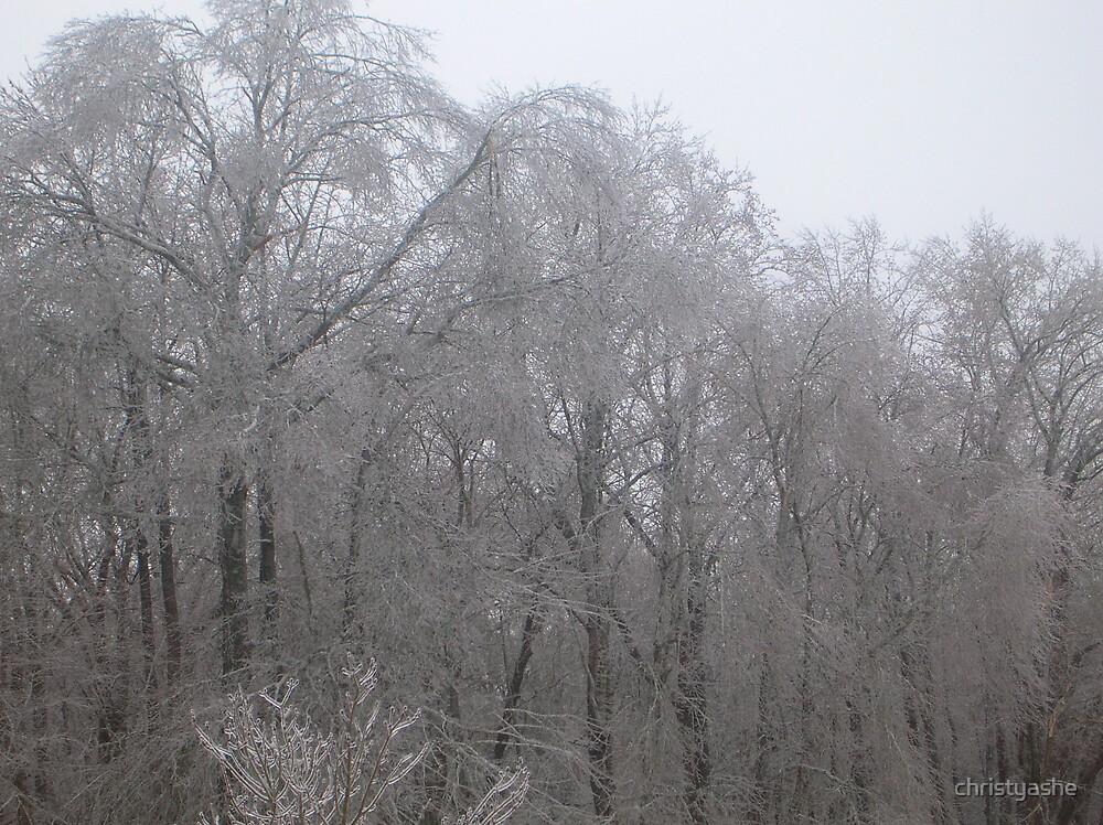 Iced Trees by christyashe
