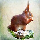 Red Squirrel by Rubyblossom