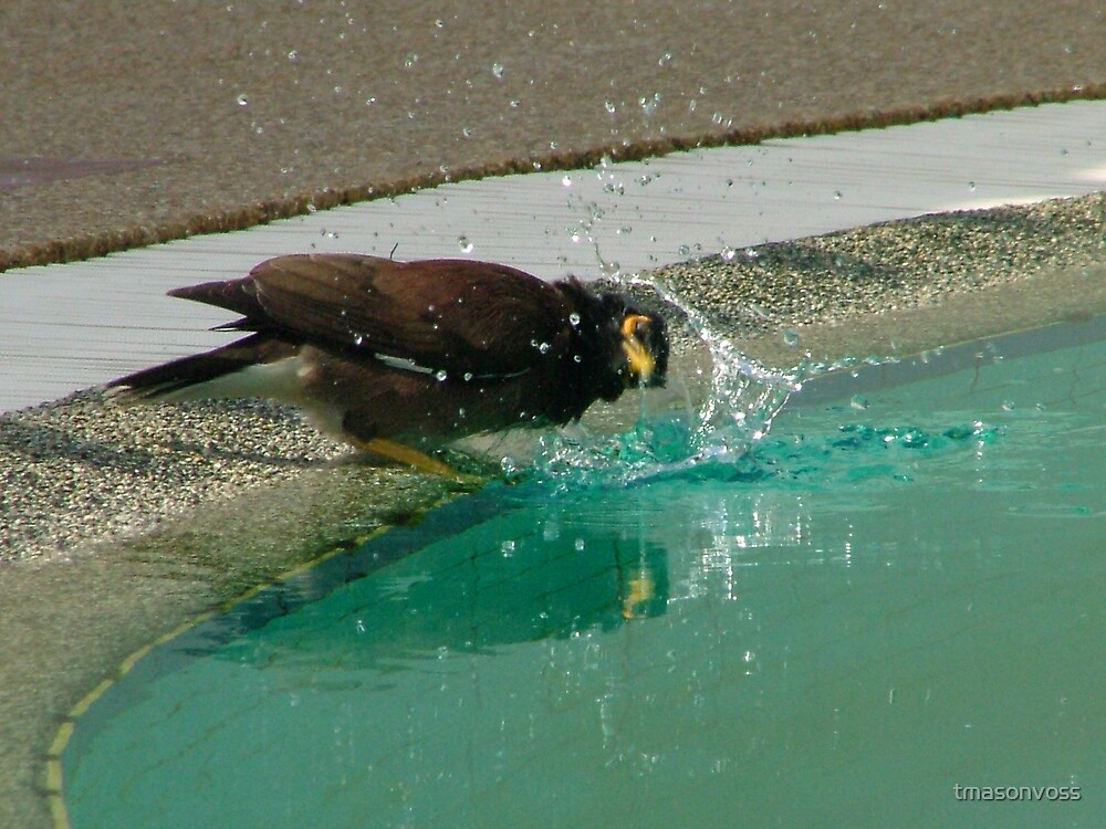 bird bath by tmasonvoss