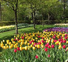 Multicoloured Tulips - Keukenhof Gardens by BlueMoonRose