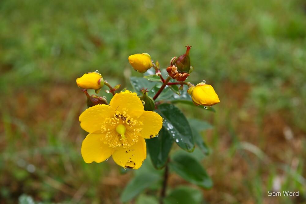 Burst of Yellow by Sam Ward