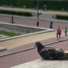 A Pigeon in Paris by Sam Ward