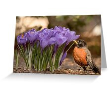 Robin in the spring flowers Greeting Card