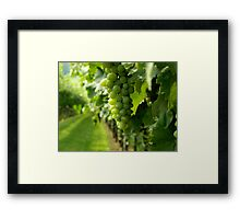 Vineyard View   ^ Framed Print