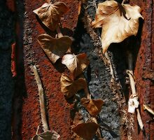 Two Kinds of Decay by Dave Pearson